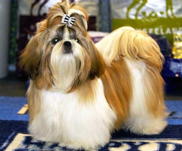 Какие самые маленькие породы собак