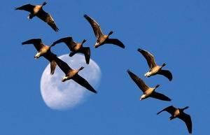 В каком месяце улетают птицы на юг