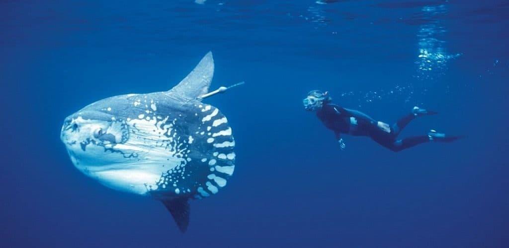 Самые странные рыбы в мире