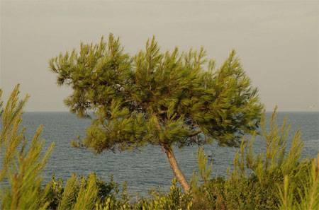Дикорастущие деревья названия