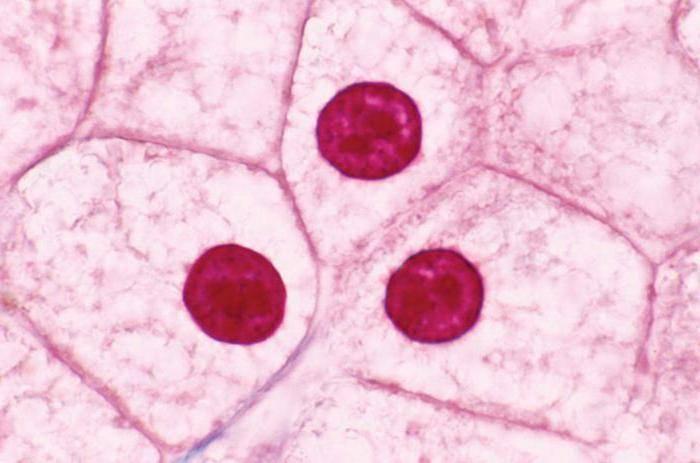 Чем отличается живая клетка от растительной