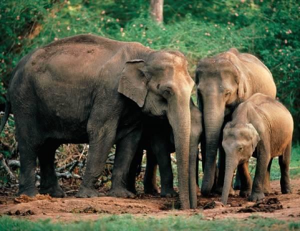 Какие животные живут в индии