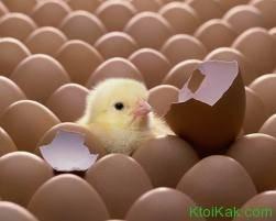Кто рождается из яйца
