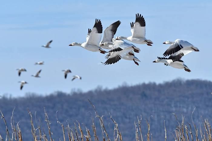 Какие птицы улетают в теплые страны