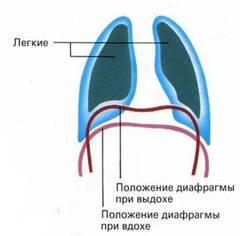 Почему человек дышит