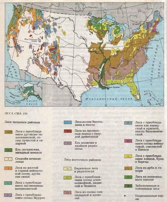 Американские леса