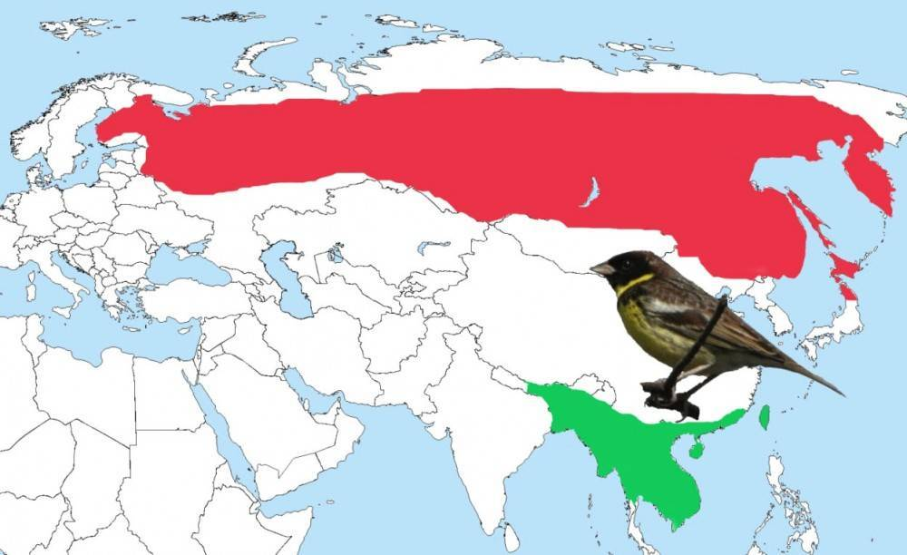 Почему птицы улетают на юг и возвращаются