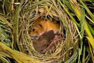 Фото леса с животными и растениями
