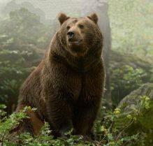 Бурый медведь занесен в красную книгу россии