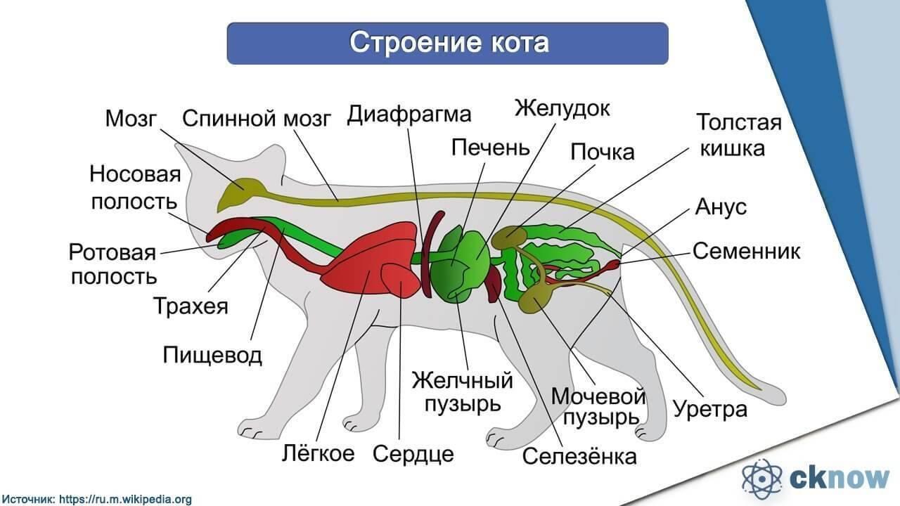 Хордовые животные основные классы их характеристика