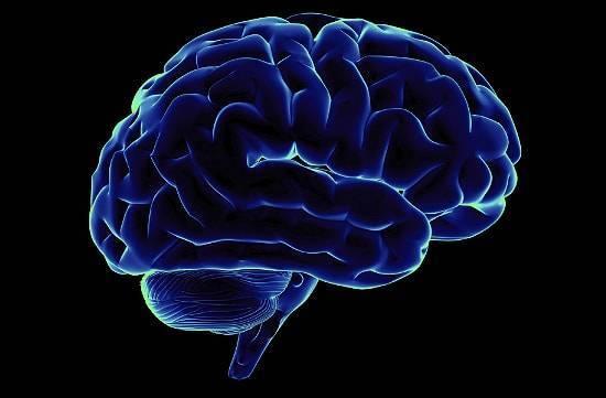 Самый большой мозг у человека