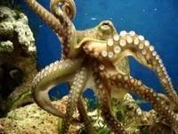 Самое большое животное в океане