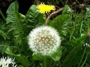 Какие есть лечебные растения