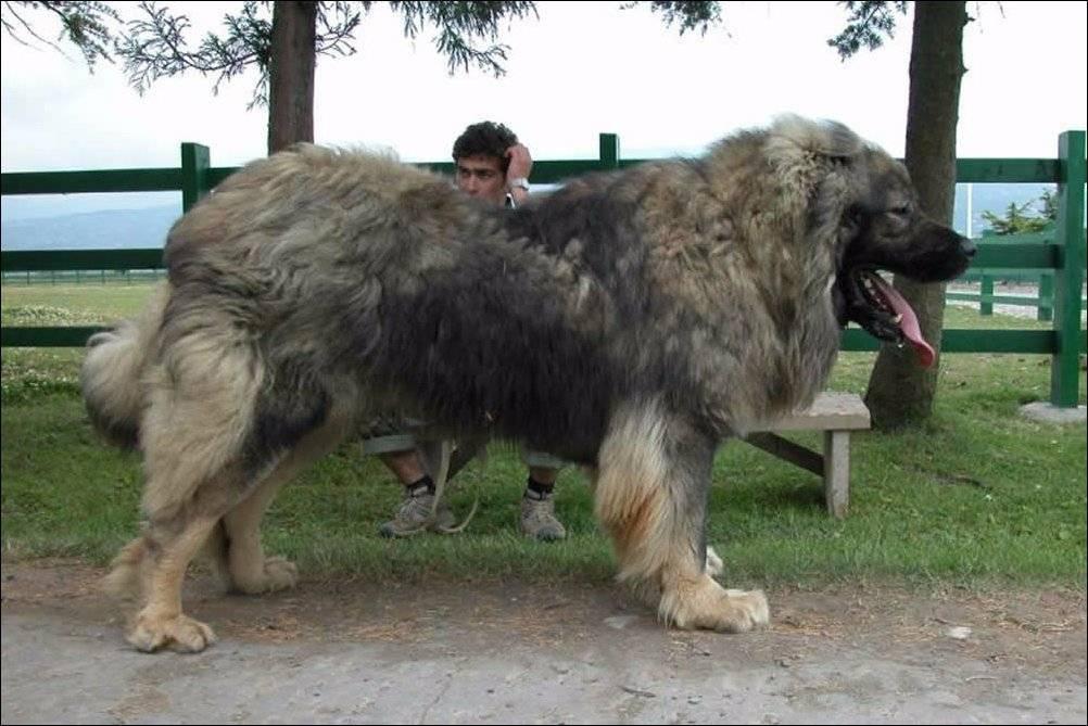 Собака описание для детей