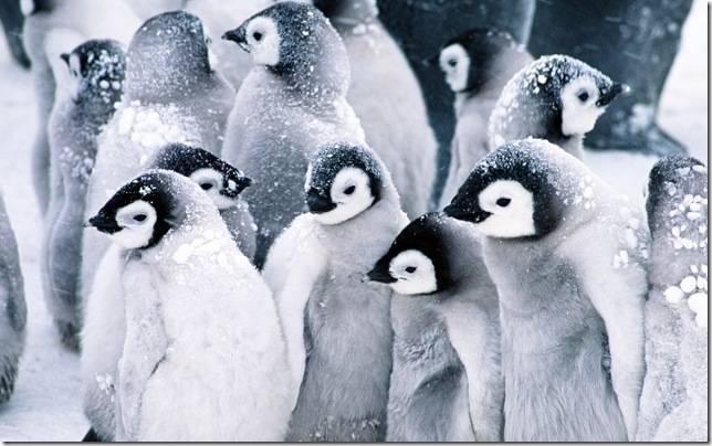 К какому классу относятся пингвины