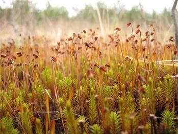 Какие растения в смешанных лесах