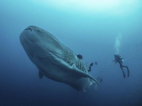 Самая огромная рыба в мире