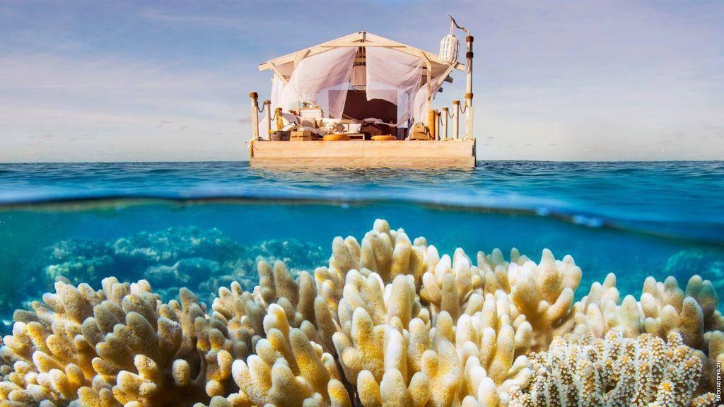 Большой коралловый риф в австралии