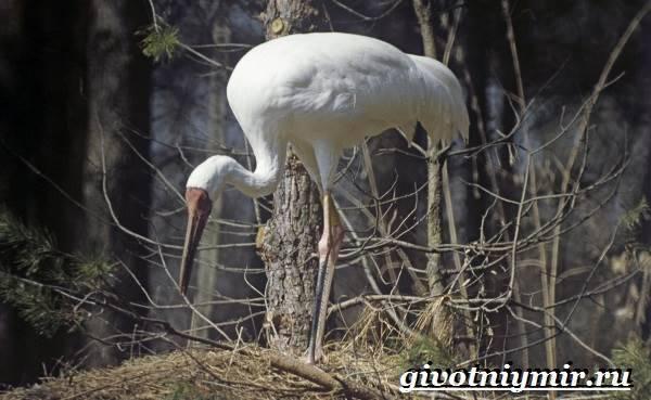 Как птицы приспособлены к суровым условиям тундры