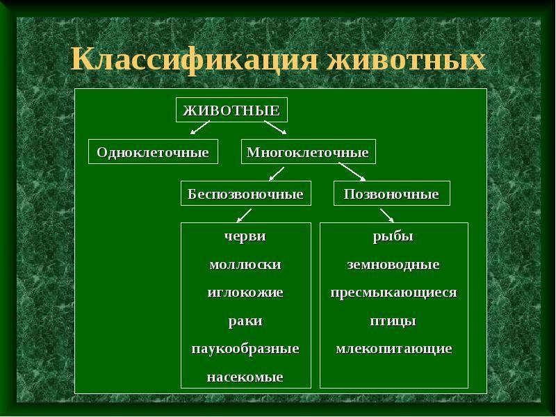Классификация животных таблица с примерами