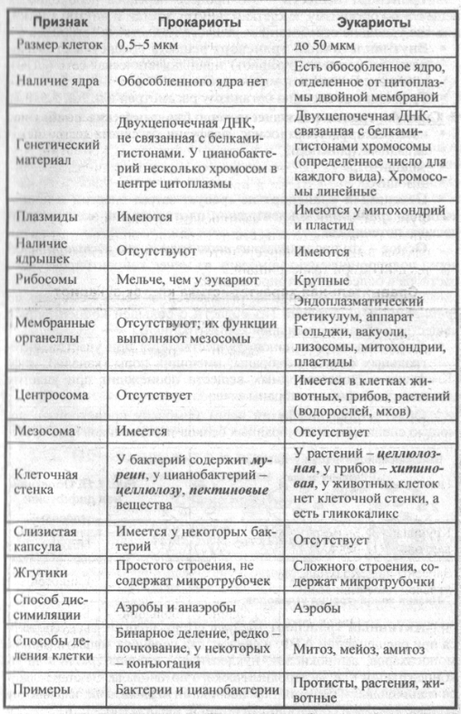 Строение и функции растительной клетки таблица