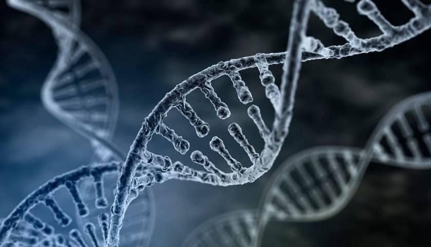Гаплоидный и диплоидный набор хромосом определение