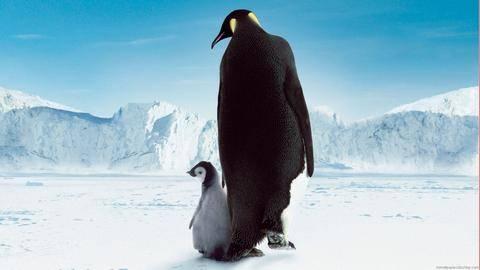 Интересные факты о пингвинах для детей