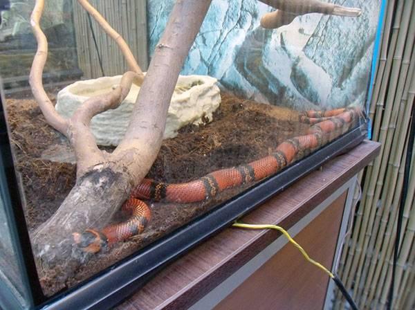 Декоративные змеи