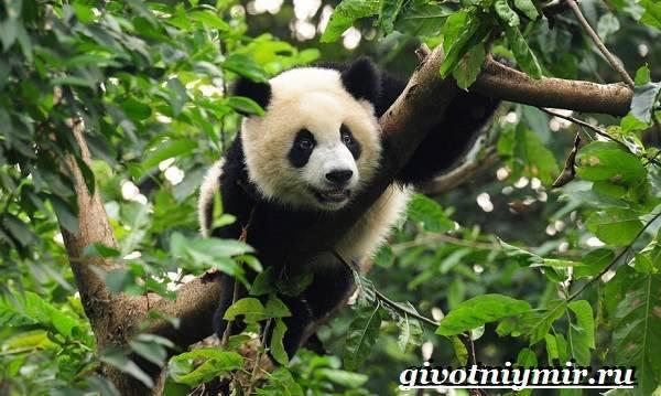 Тропические животные фото и названия