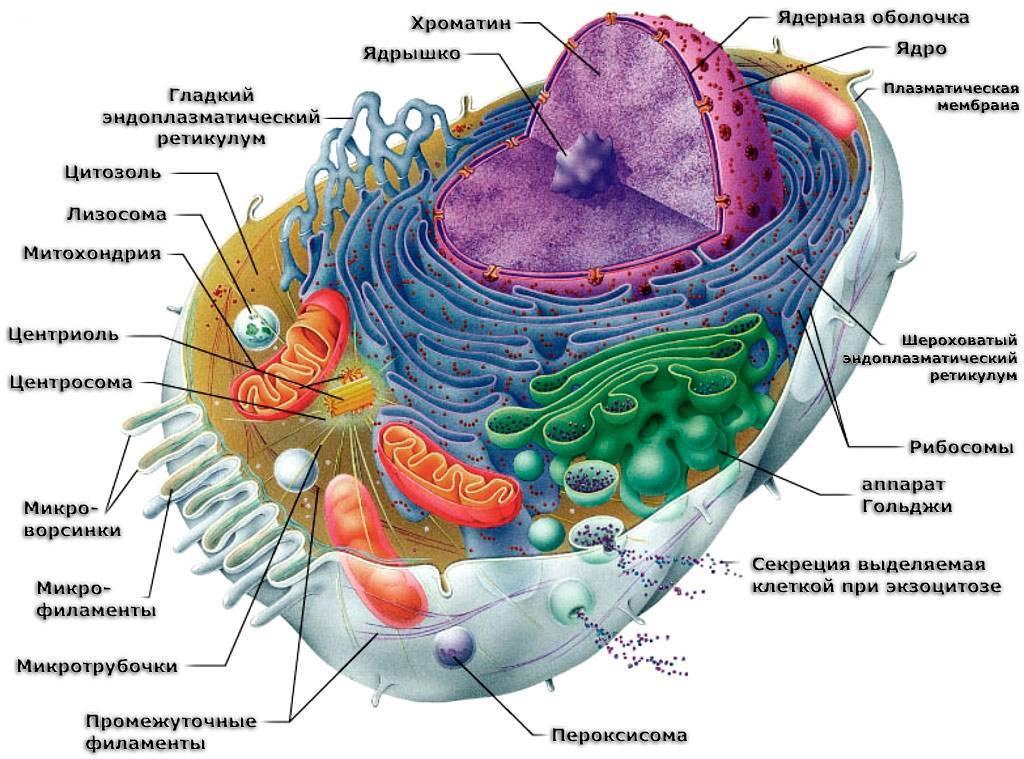 Наличие ядра у растений