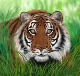 Где живет тигр на каком материке