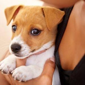 Маленькая белая пушистая собачка что за порода
