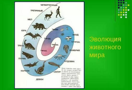 Эволюция позвоночных животных