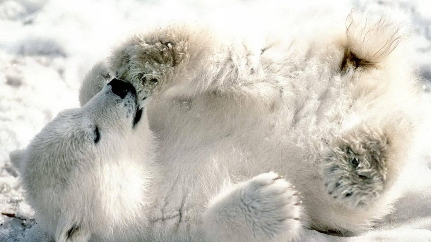 Сколько спит медведь