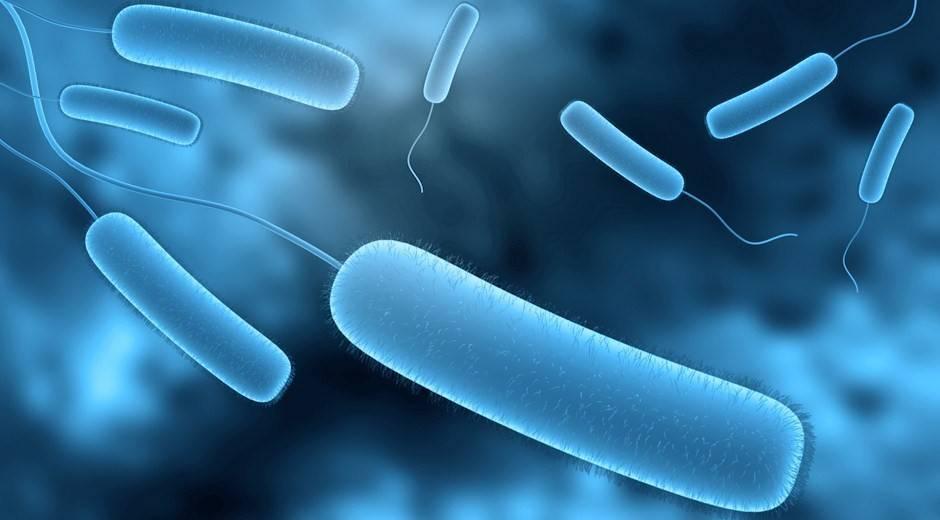 Бактерии вредные для человека
