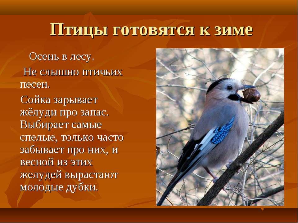 Сочинение как птицы к зиме готовятся