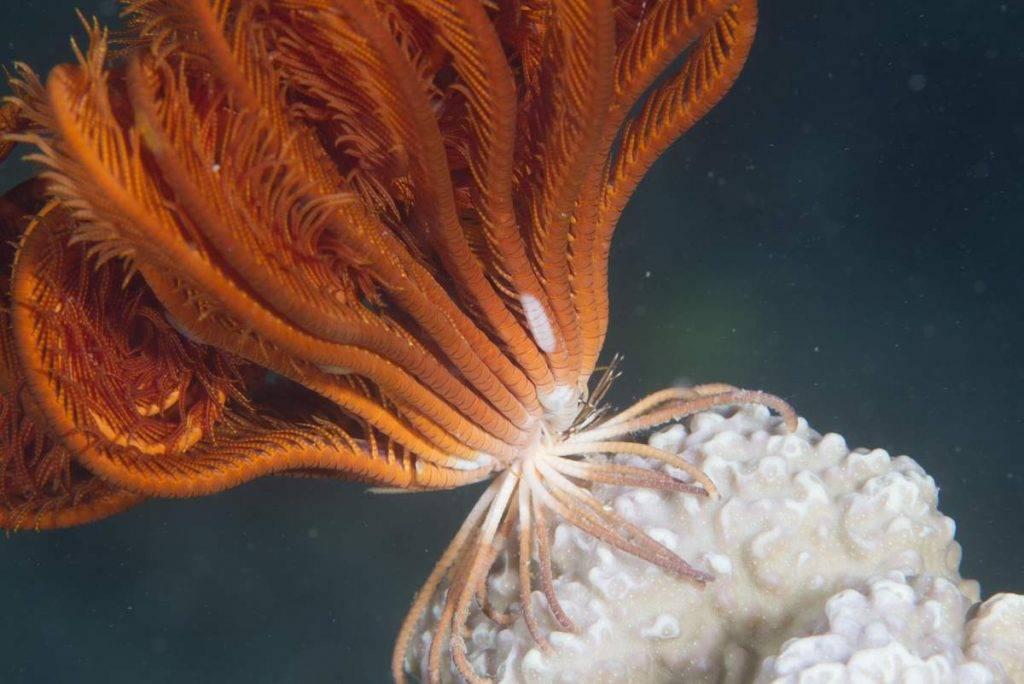 Кольчатые черви фото