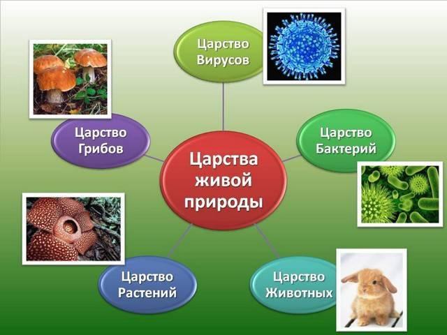 Царства живой природы схема