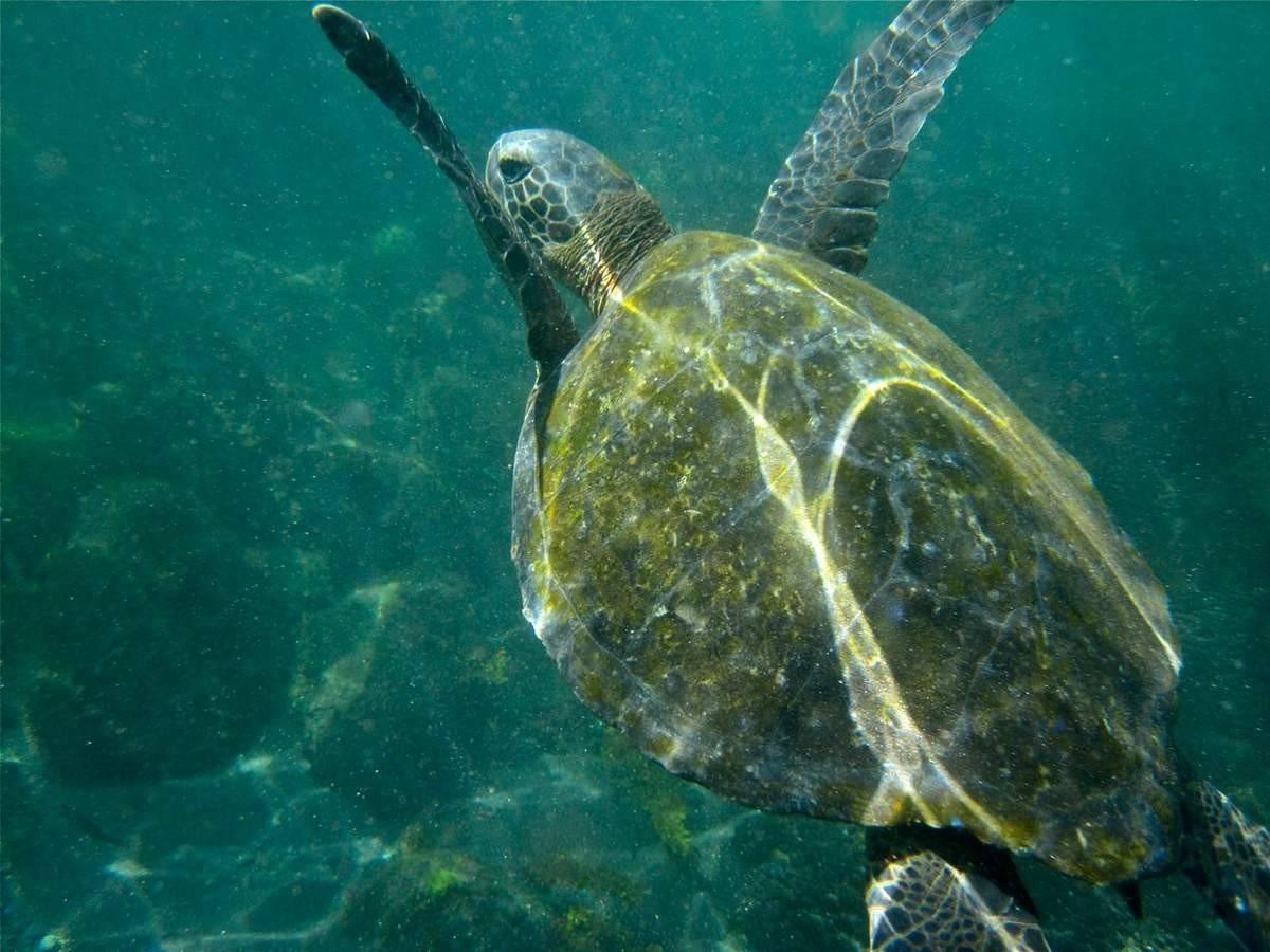 Чем питаются морские черепахи
