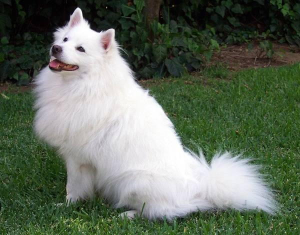 Породы небольших собак фото и название