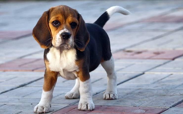 Топ 10 лучших пород собак