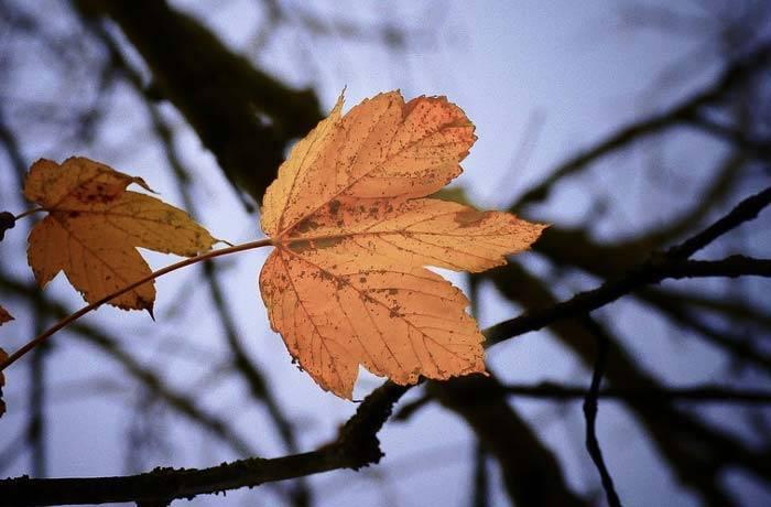 Сочинение на тему опавшие листья