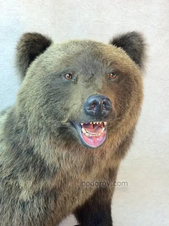 Все о медведях для детей