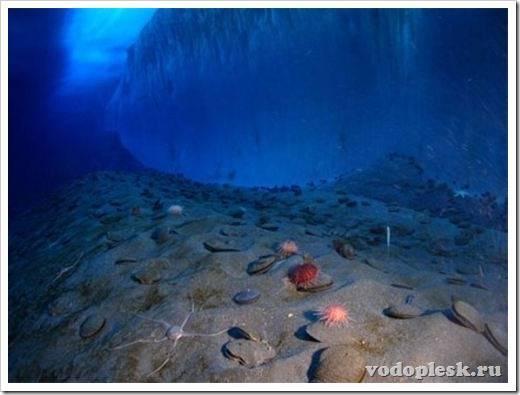 Какой океан имеет наибольшую максимальную глубину