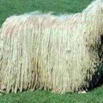 Породы собак с длинной шерстью