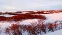 В каком климатическом поясе находится тундра