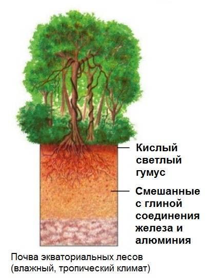 Где находятся влажные экваториальные леса