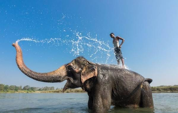 Слон описание животного для детей