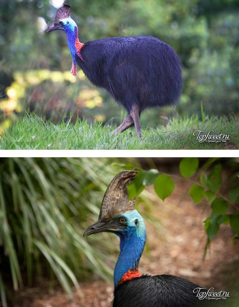 Ядовитые птицы фото и названия