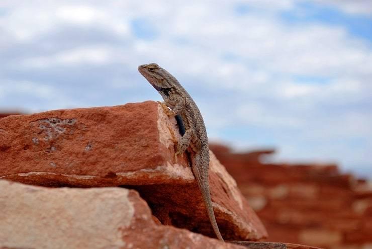 Ящерица геккон фото